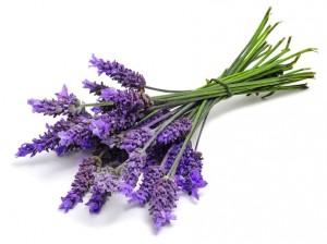Lavender Bundle